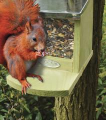ESSCHERT DESIGN Krmení pro veverky